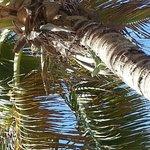 paradise palms.
