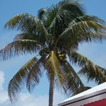 Coconut palm tree next door.