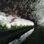 春には桜がとても綺麗です!