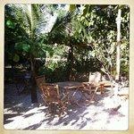 le jardin... où vous prendrez le petit-déjeuner...