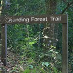 Banding Forest Trail