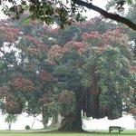 Pohutukawa tree and sea view across the road