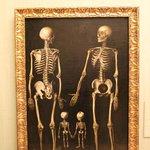 Enguedanos, skeleton family