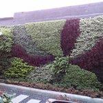 Plant Mural (Daytime)