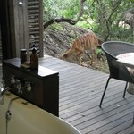 Nyalas are close to the room