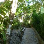 Pathway to the house