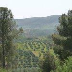 vue sur les oliviers