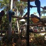 Il y a aussi de très beaux perroquets