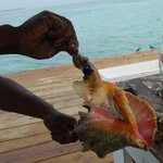 conch brought out of the shell