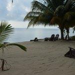 Tipple Tree's Beachfront