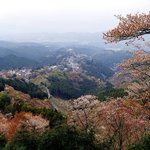 view from hanayagura -- most trees on lower altitude have turned red-brown after shedding petals