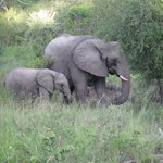 Mother Elephant with calf - Idube Game Reserve 2013