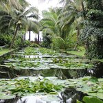 The water lily pond, so serene and full of wildlife