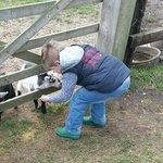 our son the future farmer feeding the kids