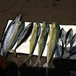 Ono, Mahi Mahi, and tuna