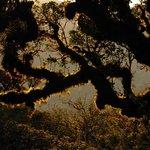 Cajanuma: Elfin forest around sunset at 2900 m a.s.l.