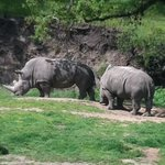 white rhinos on the jeep tour