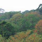 Die tropische Vegetation. die die Finca Buena Vista umgibt