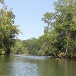 Der eindrucksvolle Mangrovenwald