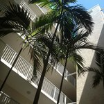 Courtyard Palm Trees