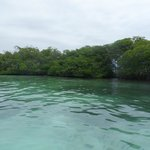 Close to the reef. Excellent swimming/snorkeling