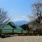 エントランス前の枝垂桜 (後に見えるのは駒ヶ岳)