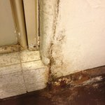 Indescribable mold and rot