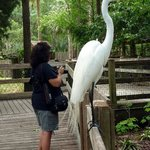 Great Egret next to wife
