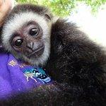 Zoological Wildlife Foundation Foto