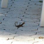 a cute lizard friend!