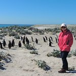 Jean and a few Gentoo Penguins