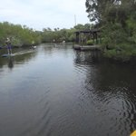 Paddling one of the canals. Saw several manatee today. :-)))