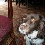 Daisie enjoying the pubs facilities