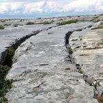 Stoney Tracks