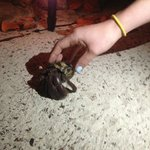 Huge hermit crabs everywhere. Kids love them