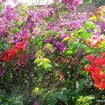 jardines increíbles