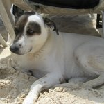 Libby- Fusion's resident dog. So cute! She sat under our chairs for shade.