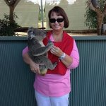 Koala cuddling at Cohuna Koala Park