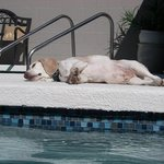 Opie enjoying the sun