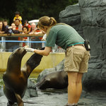 Sea Lion Demo at Woburn Safari Park