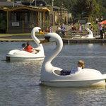 Swan Boats Free Attraction at Woburn Safari Park