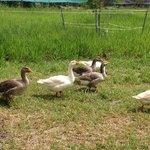 Photo de Hill Top Farmstay Accommodation Cooktown