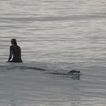 Seal passing a swimmer