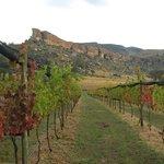 Vineyards in April