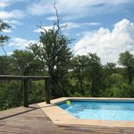 Idube - Private pool overlooking the bush