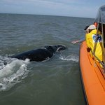 Observation de baleines et de dauphins