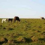Malun Grassland