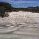 The dunes on Sea Island