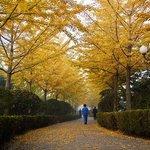 Longwan Park