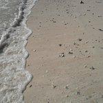 en la playa hay muchas conchas y rocas pequeñas, usen sandalias al entrar